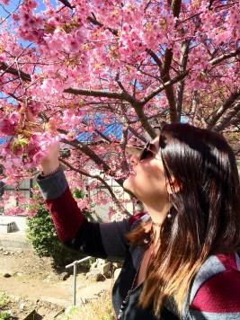 Cherry Blossom Trees in Kawaza, Japan