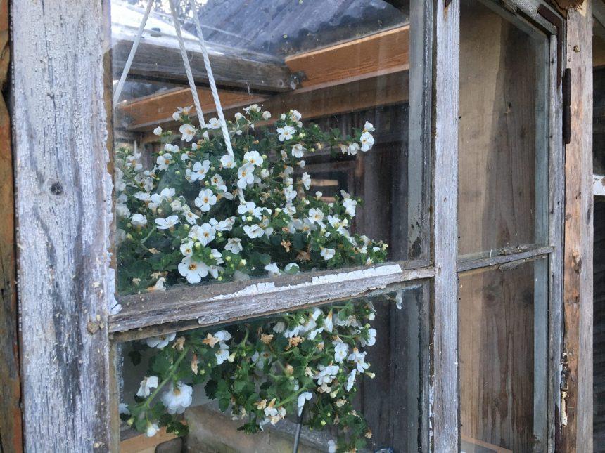 kasvuhoone aken
