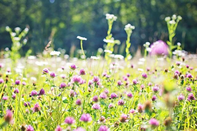 BLOMSTERSPRÅKET Hva betyr de ulike blomstene?