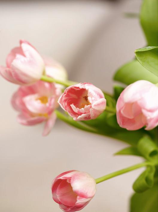 Tulipaner i Ingeniørfruens kosekrok