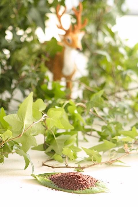 Acai fra regnskogen i Brasil - bæret med mest antioksidanter. Ren supermat!