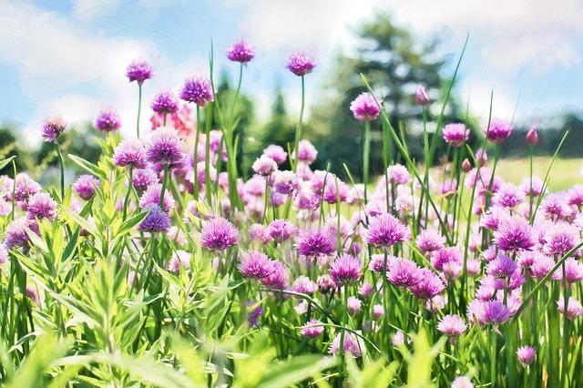 Vanning av hagen i ferien - grønnsaker og drivhus