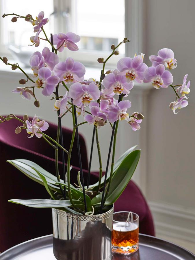 INTERIØRINSPIRASJON Orkideer i alle rom
