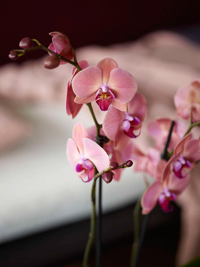 INTERIØRTIPS - INTERIØRINSPIRASJON Orkide på soverommet