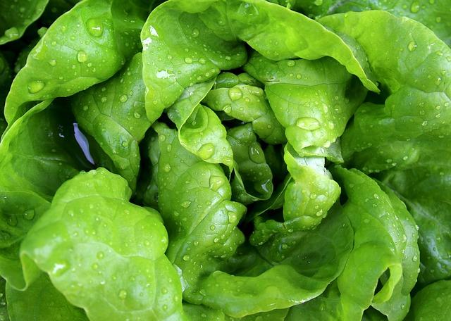 Oppbevaring av salat - temperatur og holdbarhet