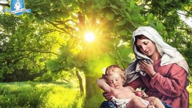 Photo of صلوات شكر لله الآب في الأسبوع الأول من السنة – اليوم الثاني