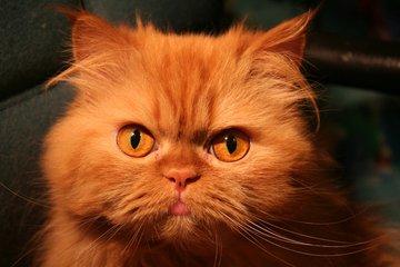 кот волшебный