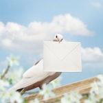 птица с письмом