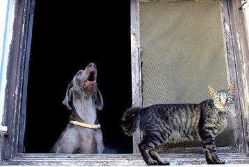 собака и кот на окне