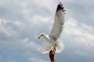 Крылатый вор