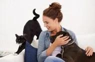 черный кот и чернй пес