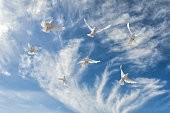 Птицы в небе