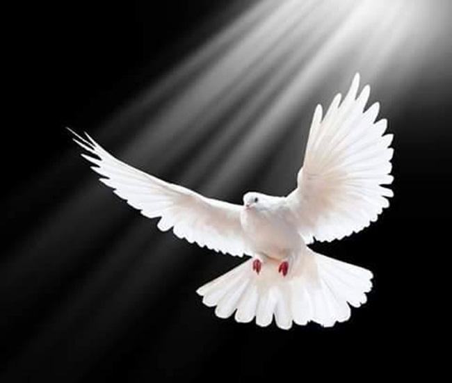 Ave blanca paloma