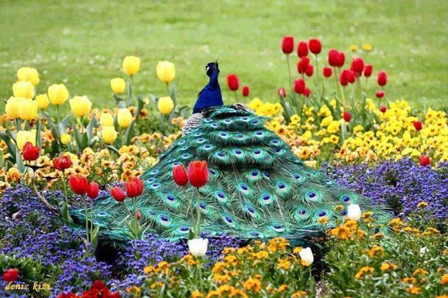 adorno-colorido