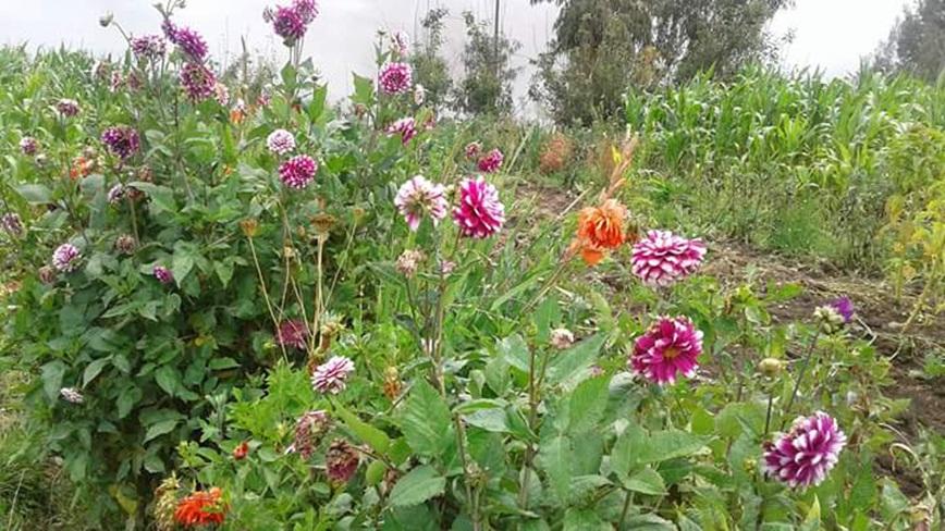flores-5555