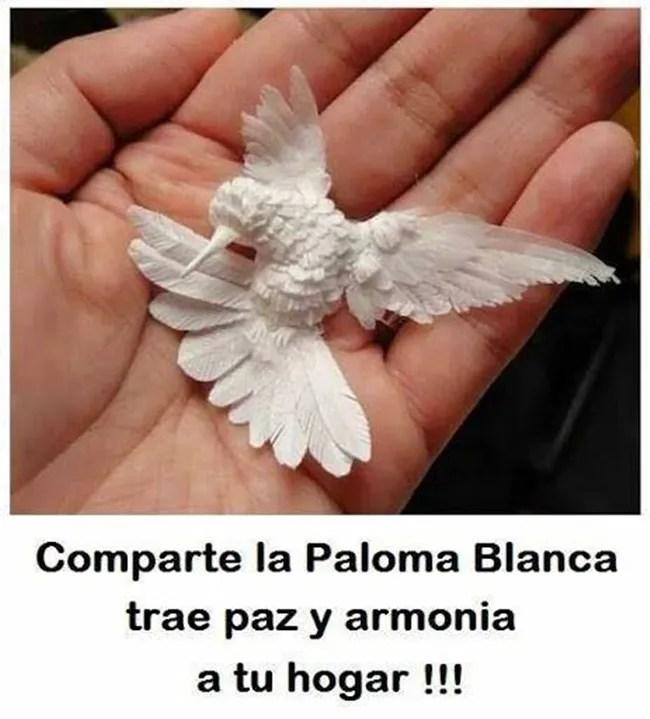 paloma-6