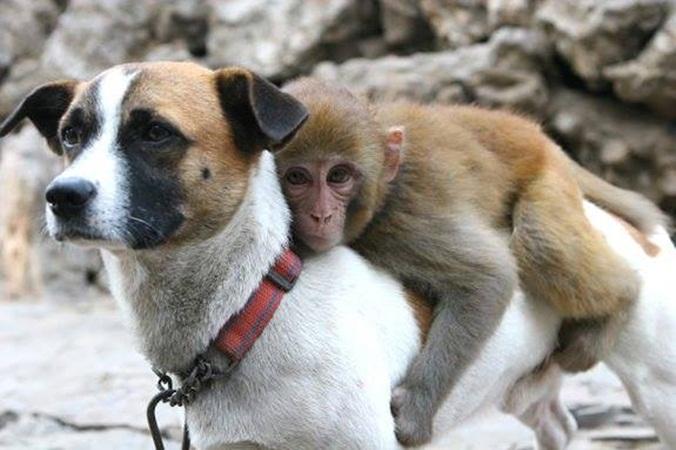 perro-y-mono