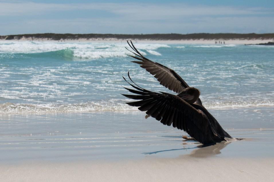 galapagos-santa-cruz-5