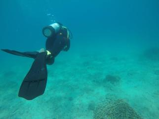 Kaosiung, Taiwan - diving in the sea, possibly finding Nemo