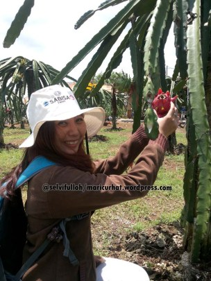 foto sama dragon fruit
