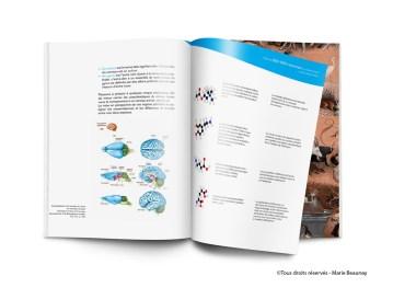 Mise en page d'un mémoire sur la neuroanatomie réalisé pour un projet de fin d'étude