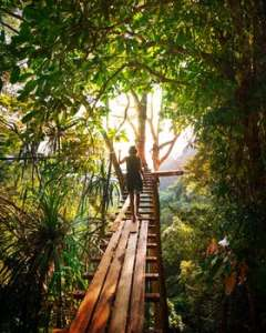 image of a woman walking across an elevated bridge theorugh the jungle on mariedeveaux.com career coaching and the quality of a good coach is they serve as a guide