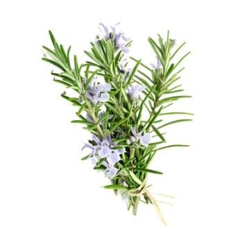 Phytotherapie-Herboristerie-Sante-Naturelle-Romarin