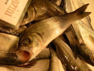 FishHelp
