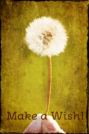 dandilion Wishes