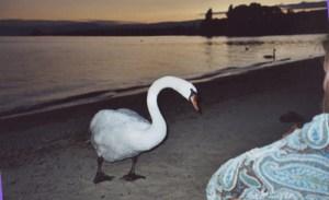 lisiunia&swan