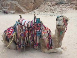 A camel was our salvation to get back