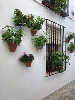 Flowerpots around a window