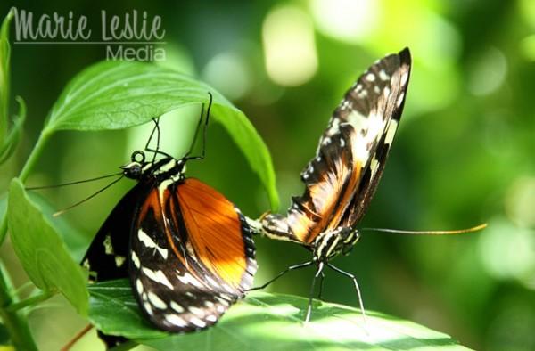 monarch butterflies, colorado photographer