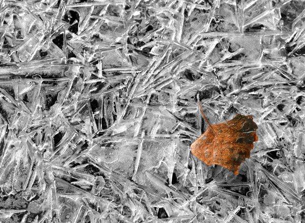 ice and autumn leaf