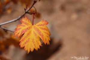 Fall Color Pop Action