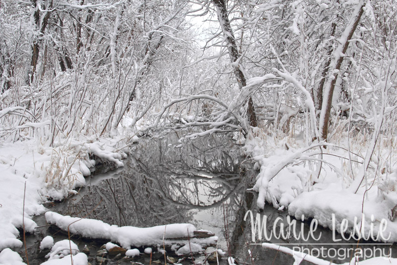 Cherry Creek in Winter