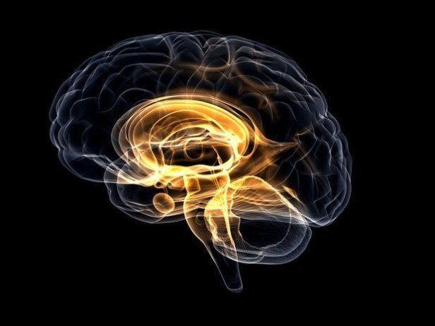 fdead27af497d8ccb2cb3e2a6db7039a--image-transfers-brain