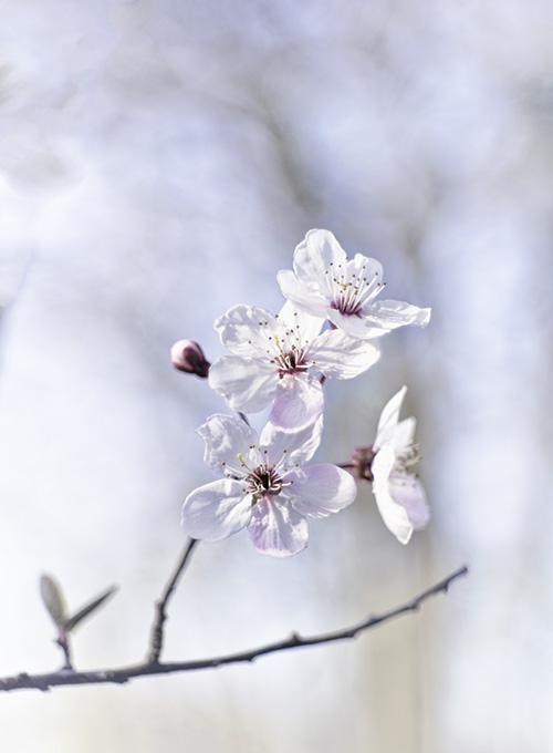 spring-lente