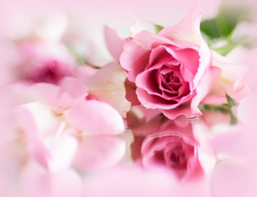 spiegeling-roosje