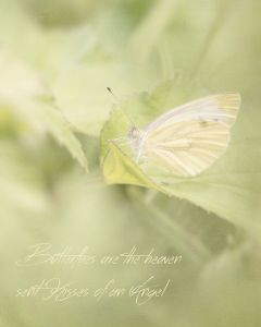 butterflies-angels-heaven