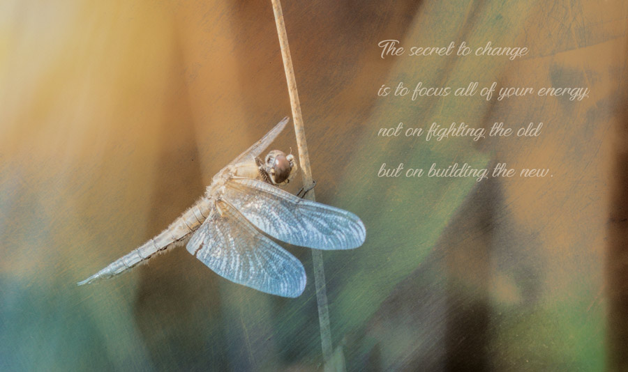dragonfly-libel-insect-quote