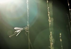 sunlight-zonlicht-juffer