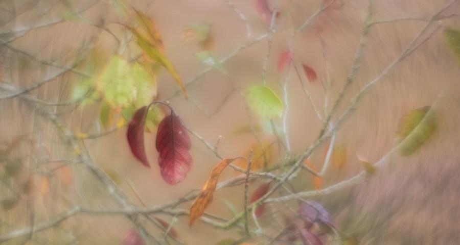 autumn swirl herfst kleuren