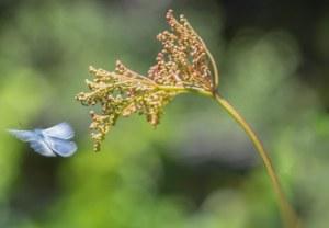 beweging-vlinder-blauwtje