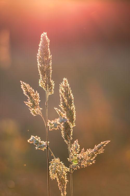 avondrood-zonsondergang-diffuus-licht