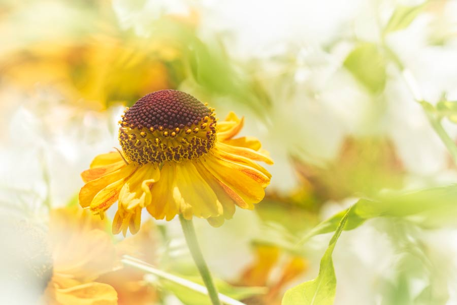 zonnehoed-zomer-geel-bloem-echinacea