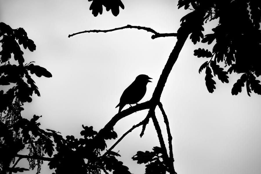 vink-zangvogel-zwart-wit-abstract