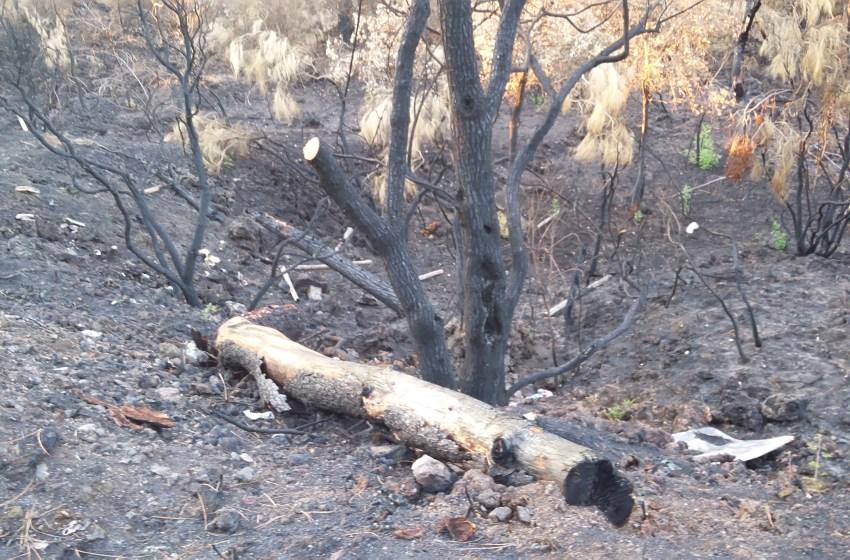 """Estate di fuoco sul Vesuvio. """"Dopo gli incendi, il pericolo sono le frane e i tumori"""". La denuncia del comitato """"Mo' Basta""""."""