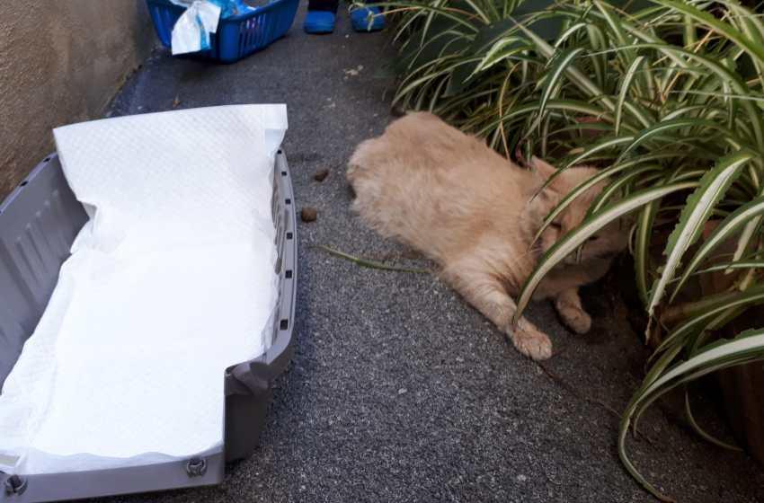 """Gatto impallinato con fucile ad aria compressa e poi investito. Rischia la paralisi. La garante: """"E' una guerra contro gli animali"""""""