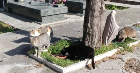 gatti-cimitero-torre-del-greco-mariella-romano-cronaca-e-dintorni
